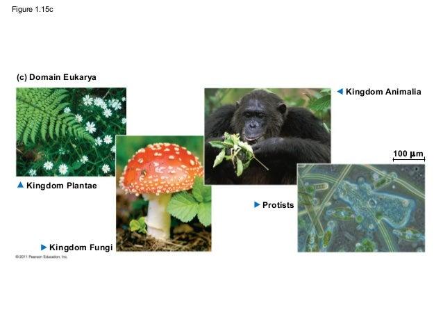 Multicellular Organisms That Ingest Their Food