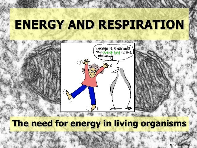 ENERGY AND RESPIRATIONThe need for energy in living organisms                                   ALBIO9700/2006JK