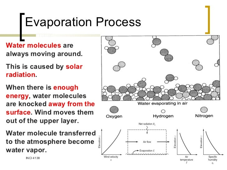 what happens to molecules during evaporation
