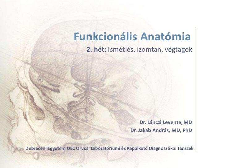 Funkcionális Anatómia                           2. hét: Ismétlés, izomtan, végtagok                                       ...