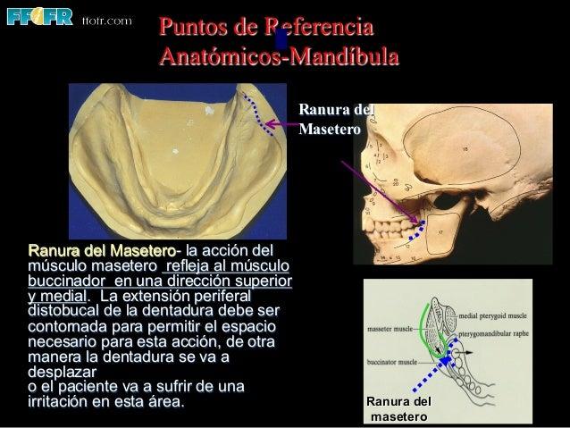 02. anatomia