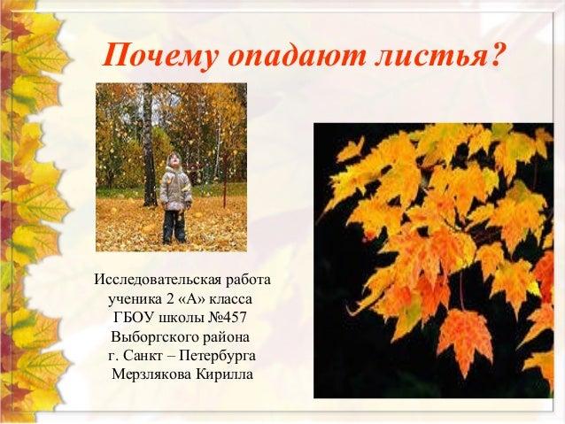 почему опадают листья исследовательская работа