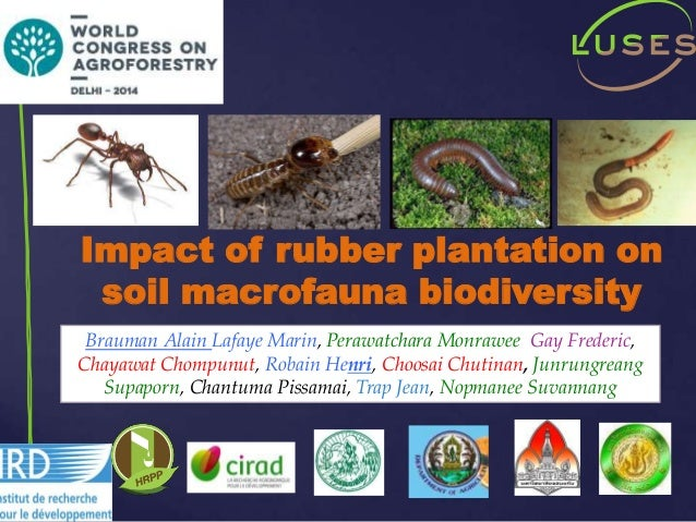 Soil 1 Year Mba Of The Impact Of Rubber Trees Plantations On Soil Functional