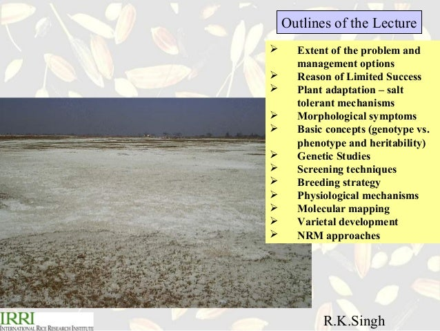 R.K. Singh .Breeding for salt tolerance in rice Slide 2