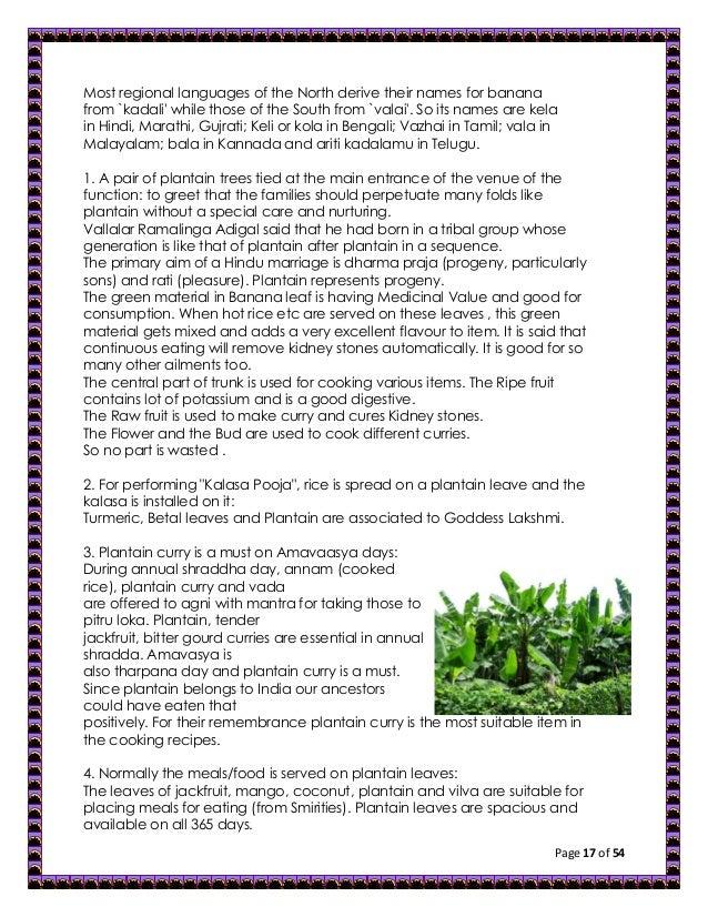 Short essay mango tree