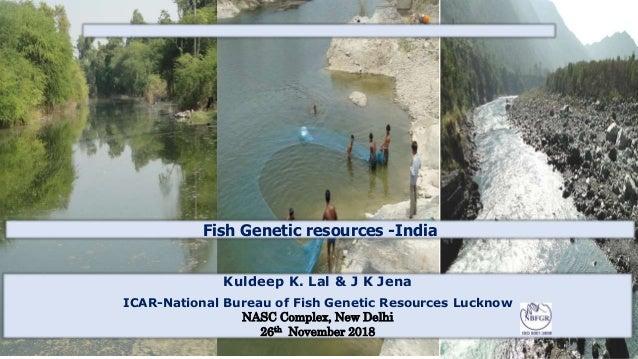 Fish Genetic resources -India Kuldeep K. Lal & J K Jena ICAR-National Bureau of Fish Genetic Resources Lucknow NASC Comple...
