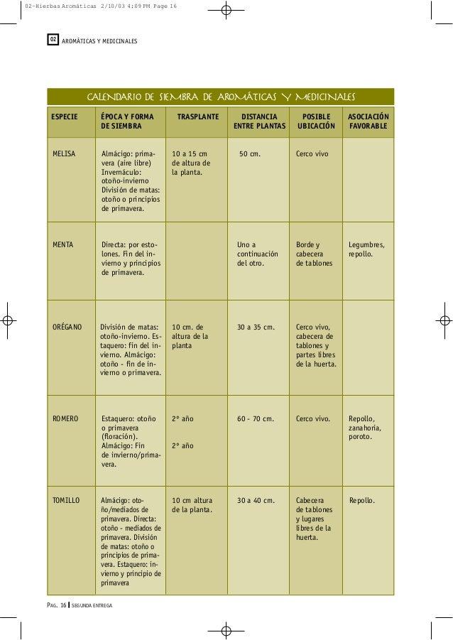 Hierbas arom ticas y medicinales for Asociacion de plantas aromaticas
