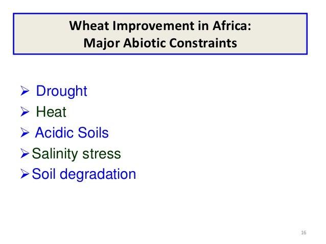 Wheat Improvement in Africa:        Major Abiotic Constraints Drought Heat Acidic SoilsSalinity stressSoil degradatio...