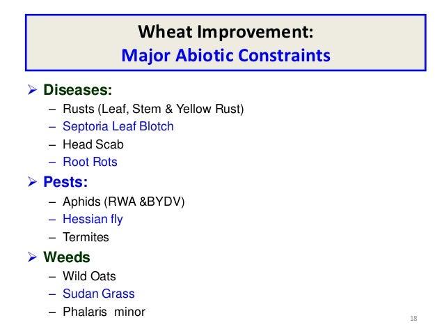 Wheat Improvement:                Major Abiotic Constraints Diseases:  –   Rusts (Leaf, Stem & Yellow Rust)  –   Septoria...