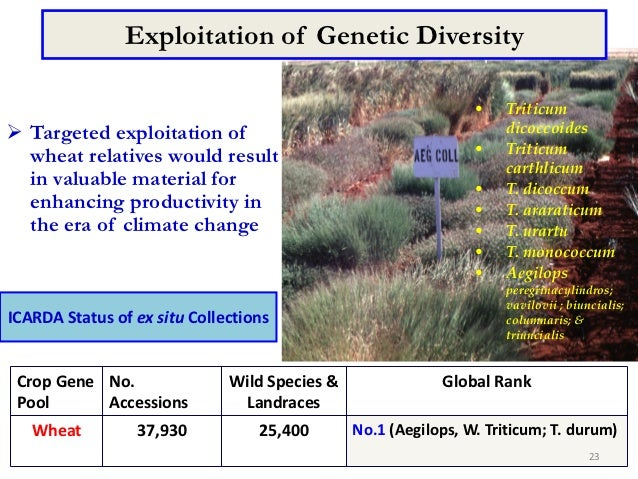 Exploitation of Genetic Diversity                                                                •    Triticum Targeted e...