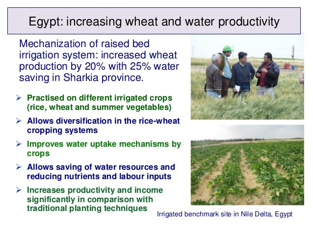 Egypt: increasing wheat and water productivityMechanization of raised bedirrigation system: increased wheatproduction by 2...