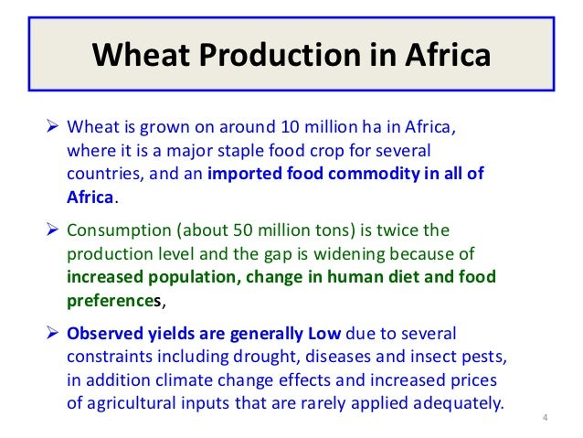 Wheat Production in Africa Wheat is grown on around 10 million ha in Africa,  where it is a major staple food crop for se...