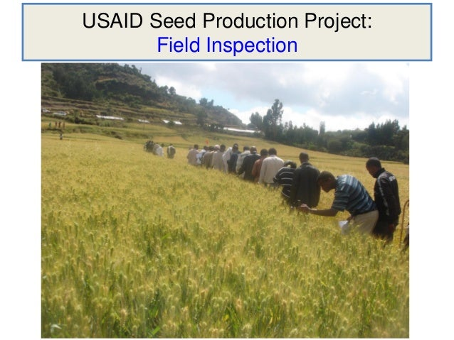 USAID Seed Production Project:       Field Inspection