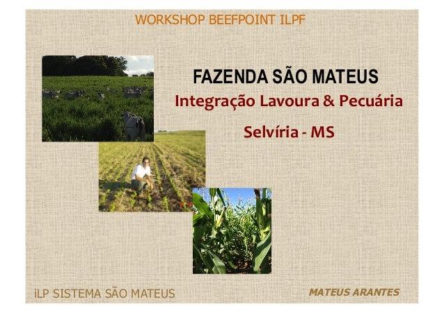 WORKSHOP BEEFPOINT ILPF MATEUS ARANTESiLP SISTEMA SÃO MATEUS FAZENDA SÃO MATEUS Integração  Lavoura  &  Pecuária  ...