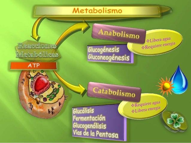 3 consejos para la mejor clase metabolismo insulina ing