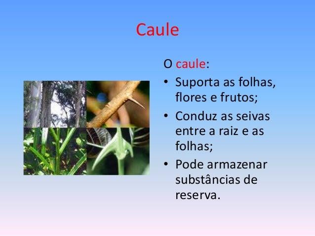 Caule O caule: • Suporta as folhas, flores e frutos; • Conduz as seivas entre a raiz e as folhas; • Pode armazenar substân...