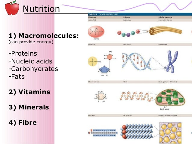 02   nutrition Slide 2
