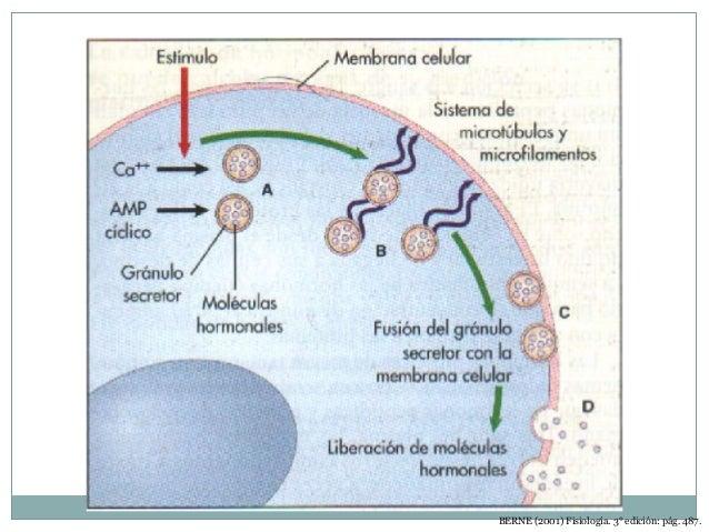 Esteroidales  Estas derivan del colesterol o compuestos similares.  Formadas por 3 anillos ciclohexilo y ciclopentilo. ...