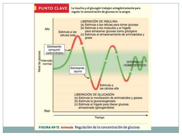 Eje Hipotálamo – Hipófisis  El hipotálamo recibe información del cuerpo mediante:  Torrente sanguíneo  Información nerv...