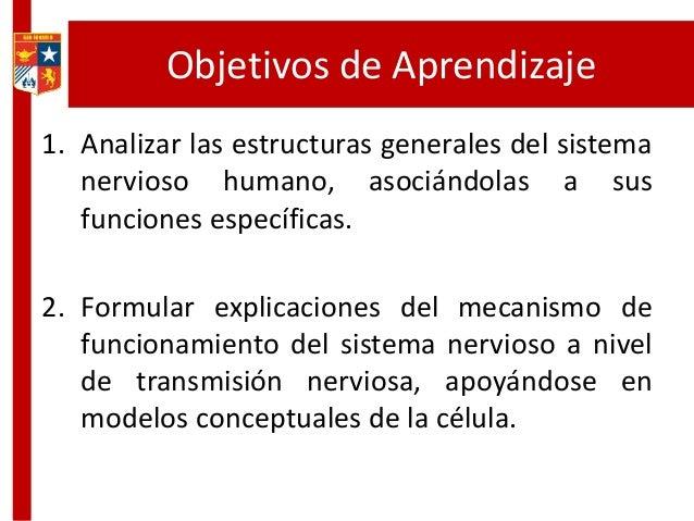 Objetivos de Aprendizaje 1. Analizar las estructuras generales del sistema nervioso humano, asociándolas a sus funciones e...