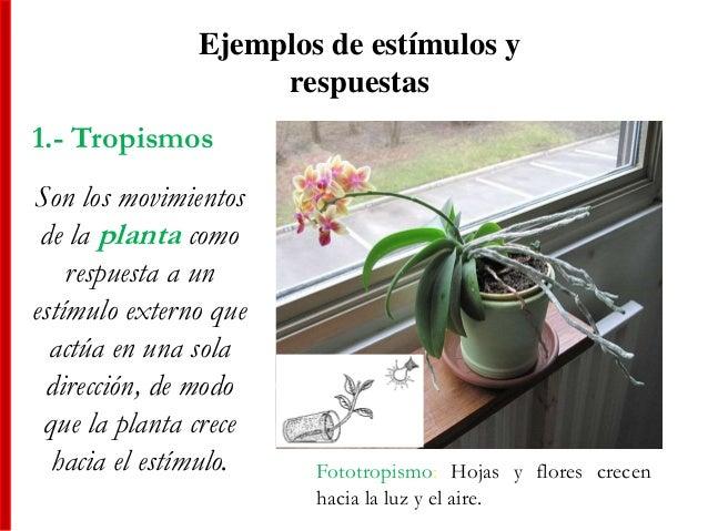 Ejemplos de estímulos y respuestas 1.- Tropismos Son los movimientos de la planta como respuesta a un estímulo externo que...