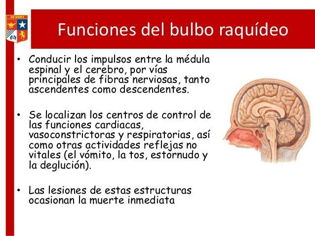 Sistema Nervioso Parte 2