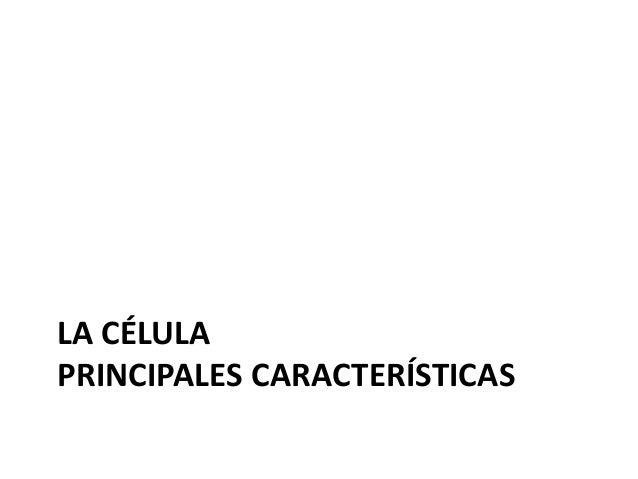 Partes Básicas de una Célula Membrana celular o plasmática Lípidos Proteínas Citoplasma Citosol Citoesqueleto ADN Ribosomas