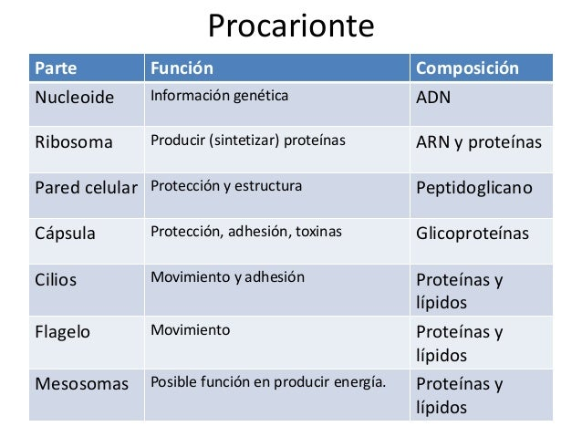 EucarionteVacuola central Cloroplasto Pared celular