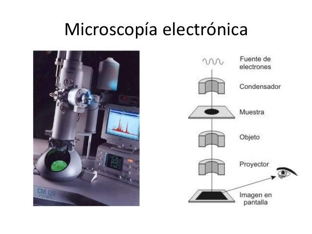 Diferentes Microscopios microscopio de contraste de fase microscopio de luz reflejada microscopio de fluorescencia microsc...