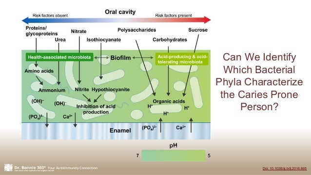 Your Autoimmunity Connection Doi: 10.1038/sj.bdj.2016.865 Can We Identify Which Bacterial Phyla Characterize the Caries Pr...