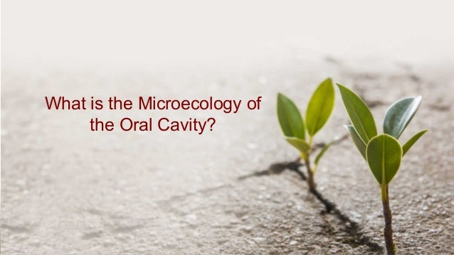 Your Autoimmunity Connection What is the Microecology of the Oral Cavity?