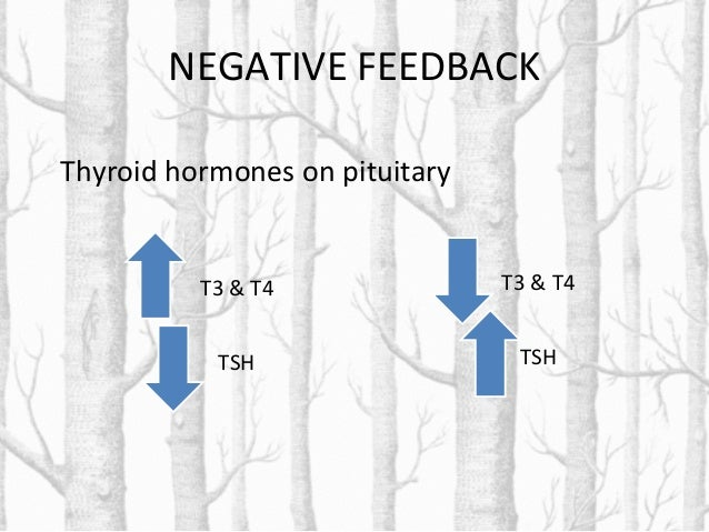 Control of thyroid gland activity • The hypothalamic-pituitary-thyroid axishypothalamic-pituitary-thyroid axis controls th...