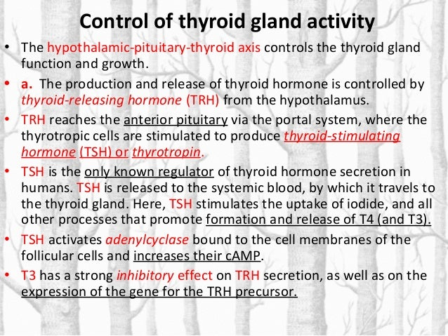 Control of thyroid gland activity • b. Almost all circulating T3 is derived from T4. TSH also stimulates the conversion of...