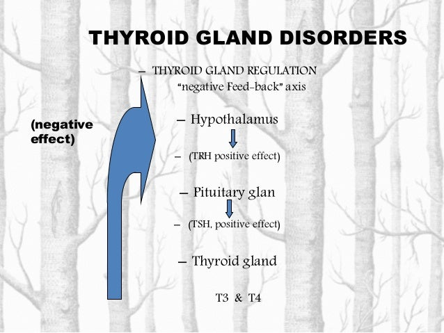 THYROID GLAND DISORDERS • Thyroid hormones: The thyroid gland maintains the metabolic level of almost all cells in the bod...