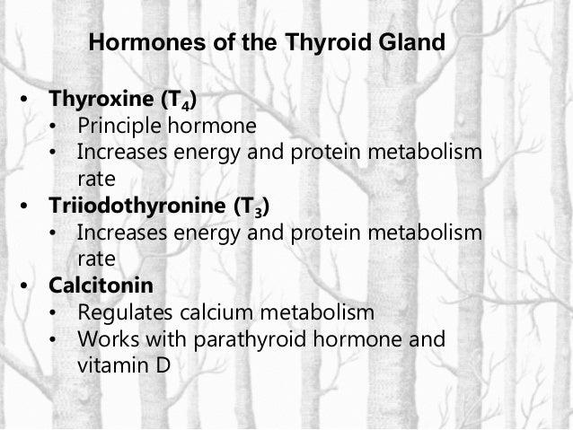 Chemistry of thyroid hormone productionChemistry of thyroid hormone production