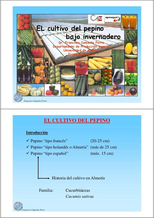 EL cultivo del pepino bajo invernadero Dr. Dr Francisco Camacho Ferre Departamento de Producción Vegetal Universidad de Al...