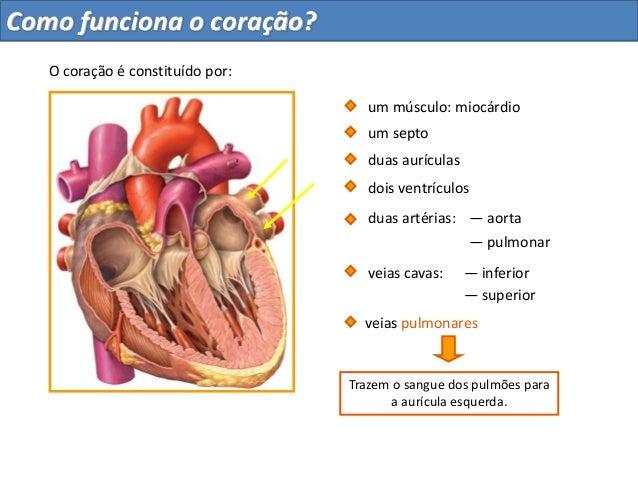 Trazem o sangue dos pulmões paraa aurícula esquerda.duas aurículasdois ventrículosum septoduas artérias: — aorta— pulmonar...