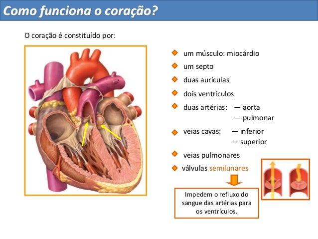 um septodois ventrículosduas artérias:— pulmonar— superiorveias pulmonaresImpedem o refluxo dosangue das artérias paraos v...
