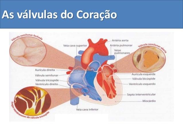 As válvulas do Coração
