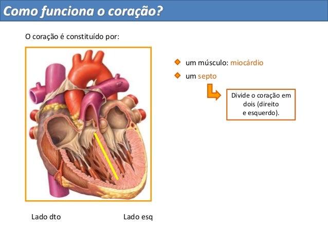 Como funciona o coração?Divide o coração emdois (direitoe esquerdo).um músculo: miocárdioum septoO coração é constituído p...