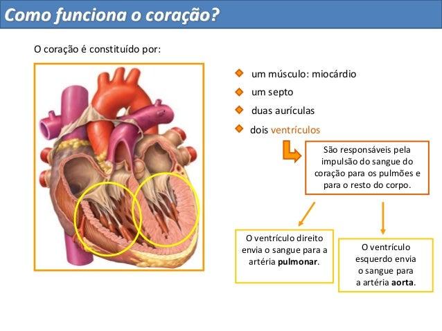 São responsáveis pelaimpulsão do sangue docoração para os pulmões epara o resto do corpo.O ventrículo direitoenvia o sangu...