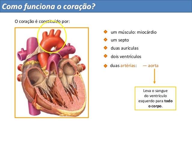 — aortaLeva o sanguedo ventrículoesquerdo para todoo corpo.duas aurículasdois ventrículosum septoduas artérias:O coração é...