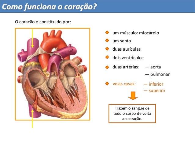 — superiorduas aurículasdois ventrículosum septoduas artérias: — aorta— pulmonar— inferiorveias cavas:O coração é constitu...