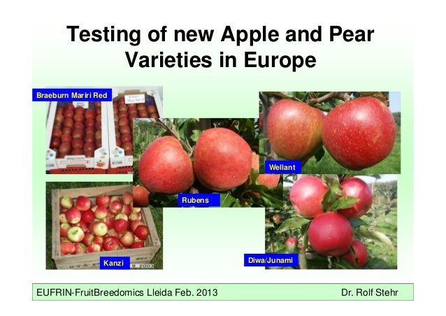 EUFRIN-FruitBreedomics Lleida Feb. 2013 Dr. Rolf Stehr Testing of new Apple and Pear Varieties in Europe Kanzi Diwa/Junami...