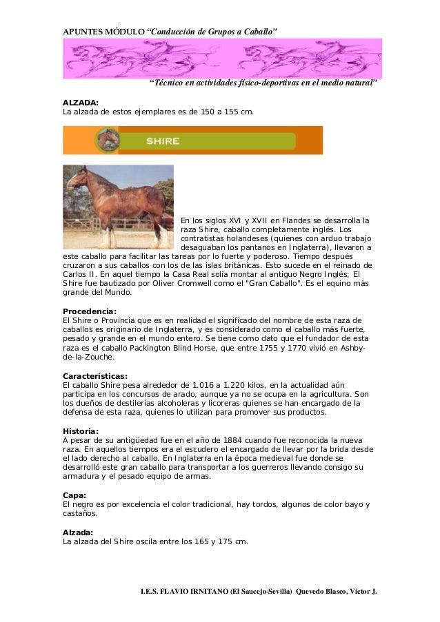02 Aspecto Y Razas Del Caballo