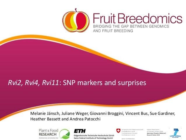 Rvi2, Rvi4, Rvi11: SNP markers and surprises Melanie Jänsch, Juliane Weger, Giovanni Broggini, Vincent Bus, Sue Gardiner, ...