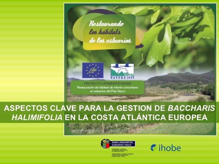 ASPECTOS CLAVE PARA LA GESTION DE  BACCHARIS HALIMIFOLIA  EN LA COSTA ATLÁNTICA EUROPEA