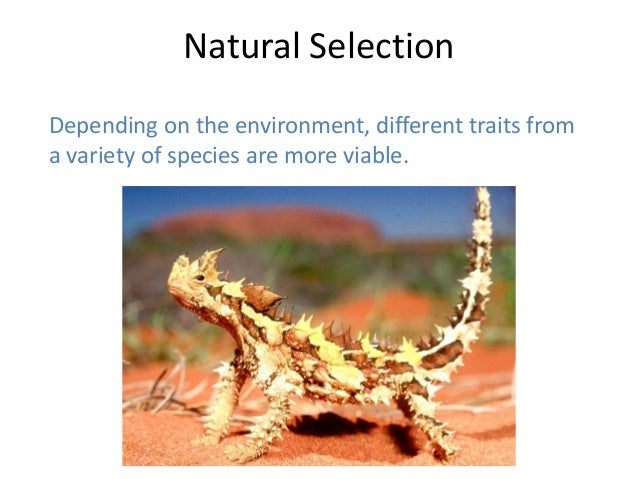 Natural Selection Example Choice Image - example cover letter