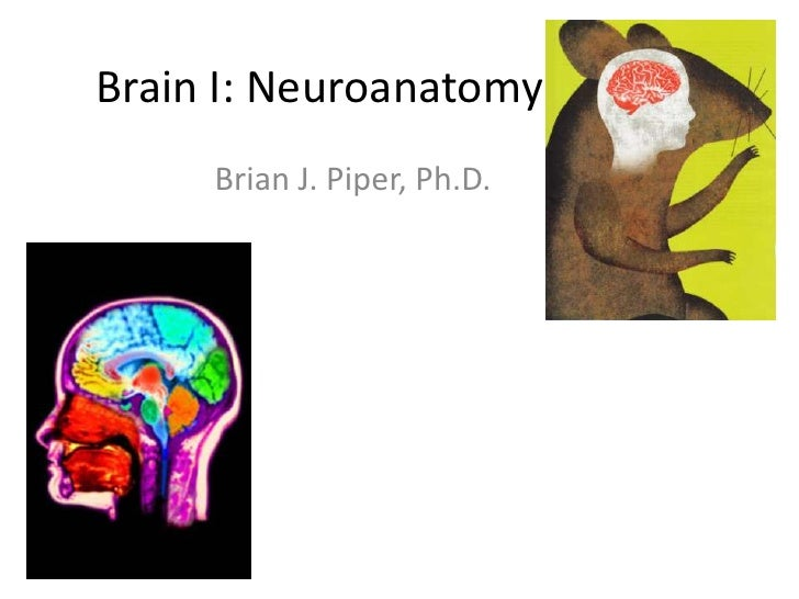 Brain I: Neuroanatomy     Brian J. Piper, Ph.D.