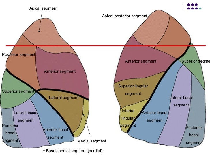 Lungensegment (Segmentum bronchopulmonale) || Med-koM